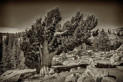 Photograph - Yosemite Near Olmsted Point Monotone 7r2_dsc2371_10072017  by Greg Kluempers
