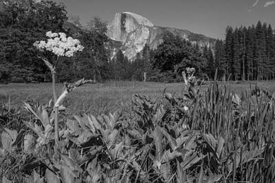 Photograph - Yosemite Queens Ann Lace Black And White  by John McGraw