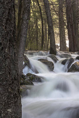 Photograph - Yosemite River And Tree 2 by John McGraw