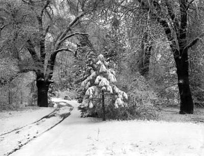 Yosemite Valley Winter Trail Art Print