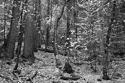Photograph - Yosemite Wilderness - Black And White Rendition by Ram Vasudev