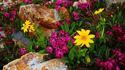 Photograph - Yosemite Wildflowers by Lawrence S Richardson Jr