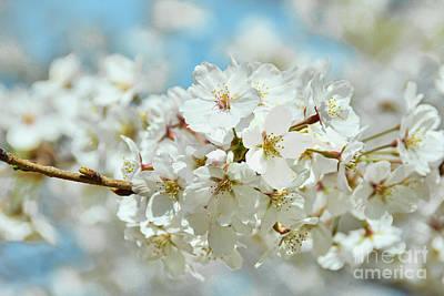 Firefighter Patents - Yoshino Cherry Blossoms White II by Regina Geoghan