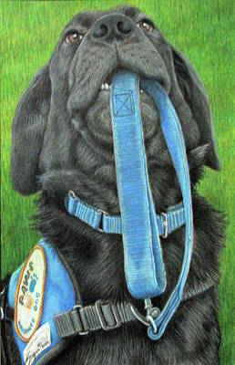 Black Labrador Drawing - You Called by Beverly Fuqua