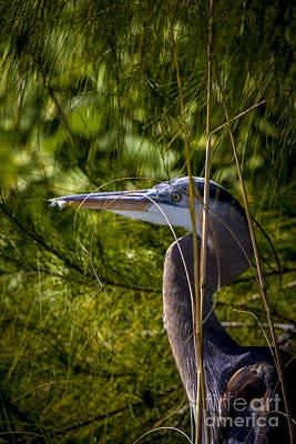 Heron Photograph - You Can't See Me by Marvin Spates