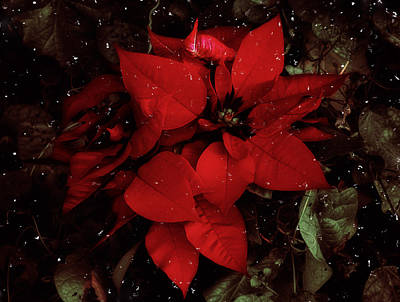 You Know It's Christmas Time When... Art Print by Elaine Malott