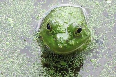 You Look Good In Green Art Print by Diane Stresing