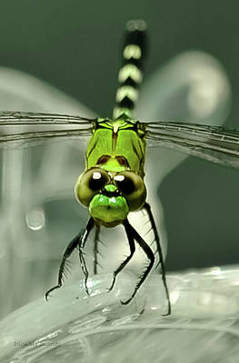 Dragonfly Ornament Photograph - You Looking At Me Looking At You by DigiArt Diaries by Vicky B Fuller