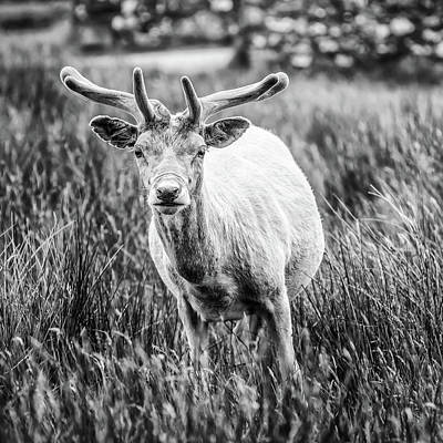 Photograph - You Looking At Me? by Nick Bywater