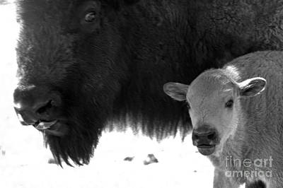 Photograph - You Looking At My Red Dog? Black And White by Adam Jewell