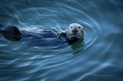 Photograph - You Otter Take My Picture, Lady by Lora Lee Chapman