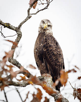 Photograph - You Lookin' At Me? by Dennis Hedberg