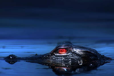 Photograph - Young Alligator by Mark Andrew Thomas