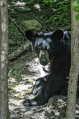 Photograph - Young Bear Visitor by John Haldane