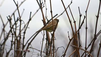 Photograph - Young Bird In Foggy Vineyard by Alex King