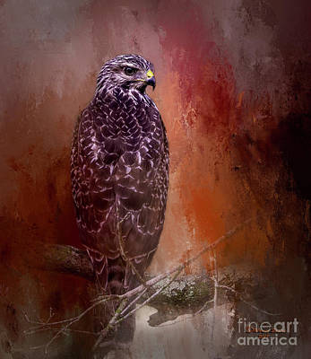Red Tail Hawk Wall Art - Photograph - Young Blood by Marvin Spates
