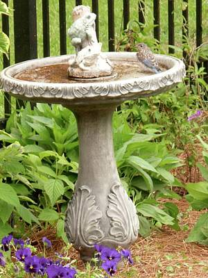 Photograph - Young Bluebird At Birdbath by Jeanne Kay Juhos