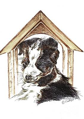 Drawing - Young Border Collie by Teresa White