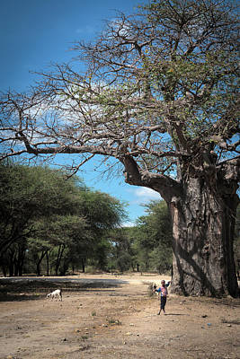 Photograph - Young Boy With Goats At The Baobab Tree by Mary Lee Dereske