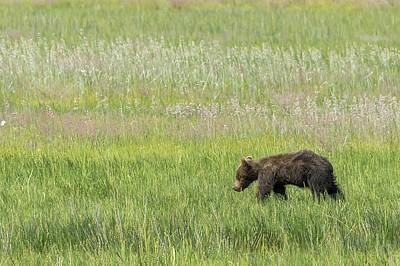 Photograph - Young Brown Bear Cub, No. 2 by Belinda Greb