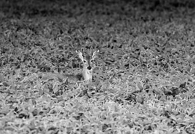 Photograph - Young Buck 2017-2 by Thomas Young