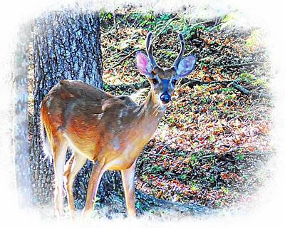 Photograph - Young Buck by Joe Duket