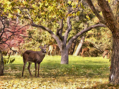 Photograph - Young Buck by Leslie Montgomery