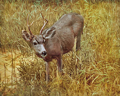 Photograph - Young Buck - Mule Deer by Nikolyn McDonald