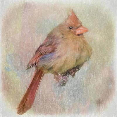 Digital Art - Young Cardinal. by Rusty R Smith