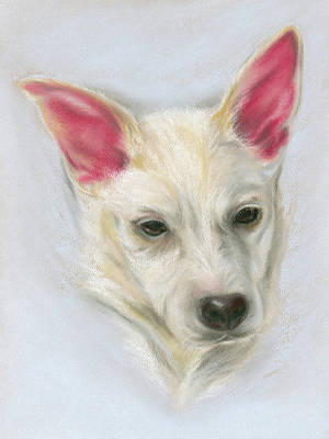Pastel - Young Carolina Dog Portrait 2 by MM Anderson