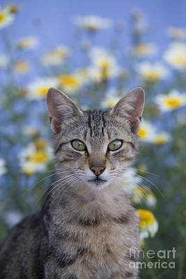 Gray Tabby Photograph - Young Cat In Greece by Jean-Louis Klein & Marie-Luce Hubert