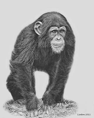 Chimpanzee Digital Art - Young Chimpanzee 2 by Larry Linton