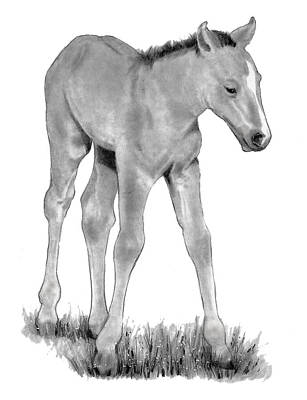 Fuzzy Drawing - Young Colt Standing by Joyce Geleynse