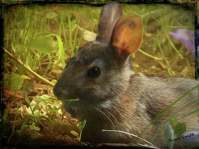 Digital Art - Young Cottontail Rabbit by Rusty R Smith