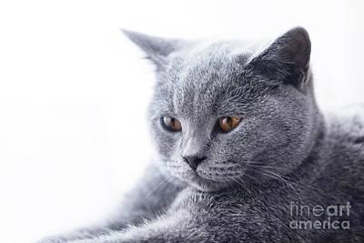Faces Photograph - Young Cute Cat Close-up Portrait by Michal Bednarek