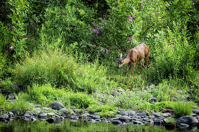 Photograph - Young Doe Among The Flora, No. 2 by Belinda Greb