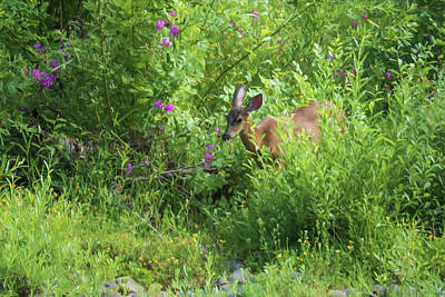 Photograph - Young Doe Among The Flora Painterly by Belinda Greb