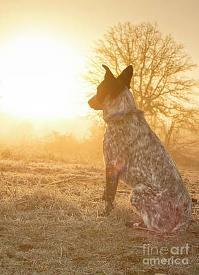 Photograph - Young Dog Sunrise by Sari ONeal