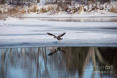 Fox River Photograph - Young Eagle Reflection And Shadow by David Bearden