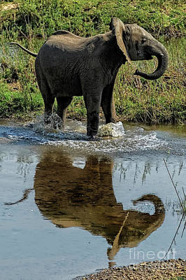 Young Elephant Playing In A Puddle Art Print by Kay Brewer