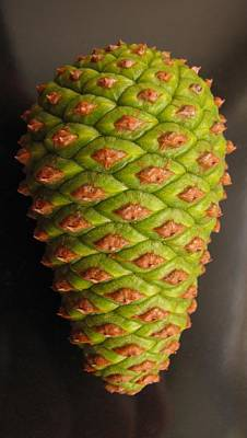 Pine Cones Photograph - Young Fallen Cone by Tony Grider