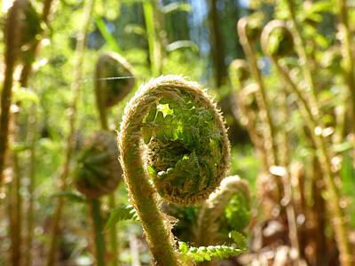 Landscape Photos Chad Dutson - Young fern by Miroslav Nemecek