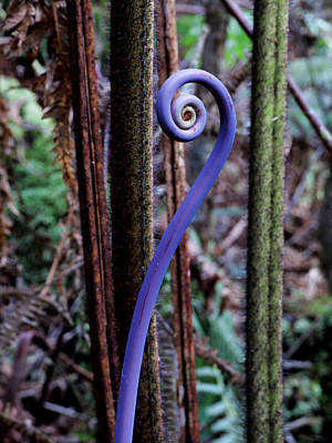 Twisty Photograph - Young Fiddle Head Fern - Hawaii by Brendan Reals