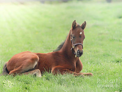 Photograph - Young Foal  by Peggy Franz