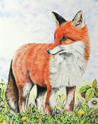 Red Fox Mixed Media - Young Fox by Elizabeth Cox