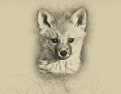 Fox Kit Digital Art - Young Fox by Sue Connor