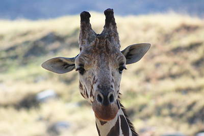 Young Giraffe Closeup Art Print by Colleen Cornelius