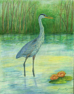 Young Great Blue Heron Art Print