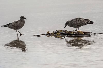 Photograph - Young Gulls by Robert Potts