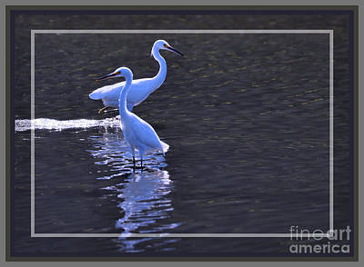 Photograph - Young Heron's Fishing, Framed by Sandra Huston